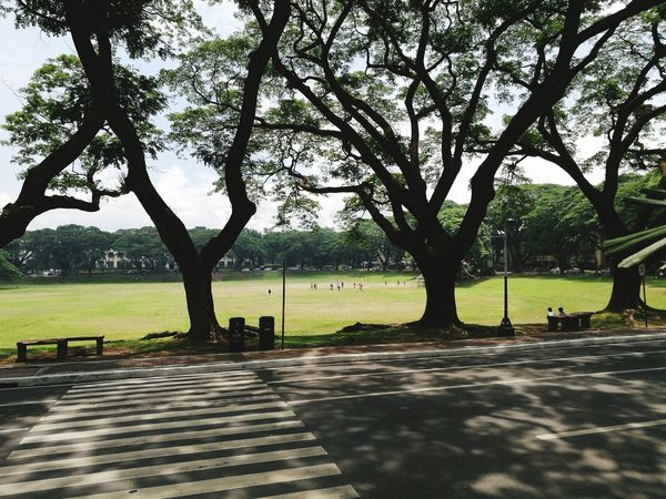 the playground of scholars Ways Of Seeing Eye4photography  EyeEm Best Shots EyeEm Nature Lover EyeEm Selects Eyeem Philippines Sunken Garden UP Diliman Open Field Geographic Tree Tree Trunk Park - Man Made Space Sky Grass Adventures In The City Focus On The Story EyeEmNewHere Tranquil Scene Tranquility Scenics Calm Treelined Idyllic Park Bench Branch Bench The Architect - 2018 EyeEm Awards The Street Photographer - 2018 EyeEm Awards The Great Outdoors - 2018 EyeEm Awards The Still Life Photographer - 2018 EyeEm Awards The Traveler - 2018 EyeEm Awards The Creative - 2018 EyeEm Awards The Photojournalist - 2018 EyeEm Awards Creative Space Summer Road Tripping 10 The Troublemakers #urbanana: The Urban Playground Summer In The City