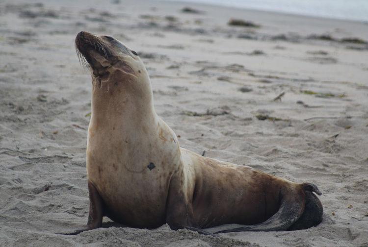 Wild Showcase April Sea Lion Encintas Moonlight Beach Beach Ocean Wildlife Wildlife & Nature Wildlife Photography