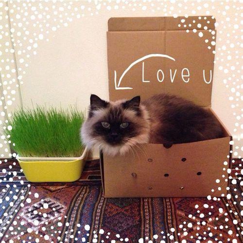 Cat CAt caT ?
