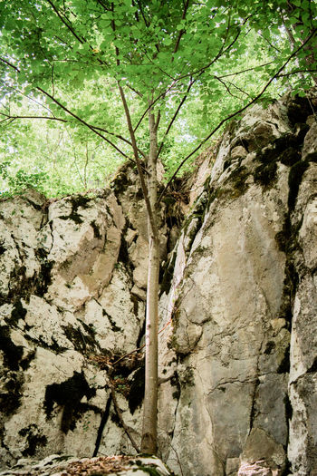 Rock Tree Architecture Beauty In Nature Day Forest Forest Photography Growth History Land Nature No People Non-urban Scene Outdoors Plant Plant Part Rock Rock - Object Scenics - Nature Sign Solid Sunlight Tree