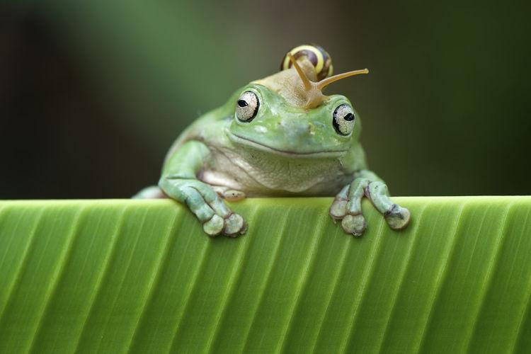 Close-up of snail on frog over leaf