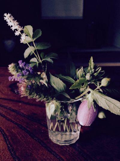 Bellflower Flower Flowerarrangement Nature Enjoying Life Countryside Relaxing IPhoneography Japan 自然 里山 田舎暮らし