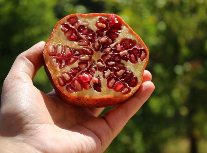 Cropped hand of person holding halved pomegranate