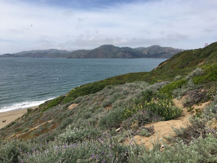 Pacific Pacific Ocean Pacific Coast Baker Beach San Francisco California Water Beauty In Nature Mountain Sky Sea Plant Cloud - Sky Tranquility Tranquil Scene Scenics - Nature Beach Day Land Nature Outdoors Landscape Bay Grass Non-urban Scene