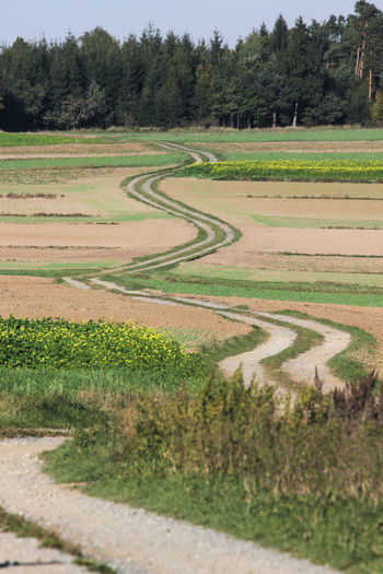 Curves Hiking Agriculture Curved Road Day Fields Green Color Landscape No People Outdoors Pilgrimage Rural Scene Trail Tranquil Scene Tranquility Waldviertel Way