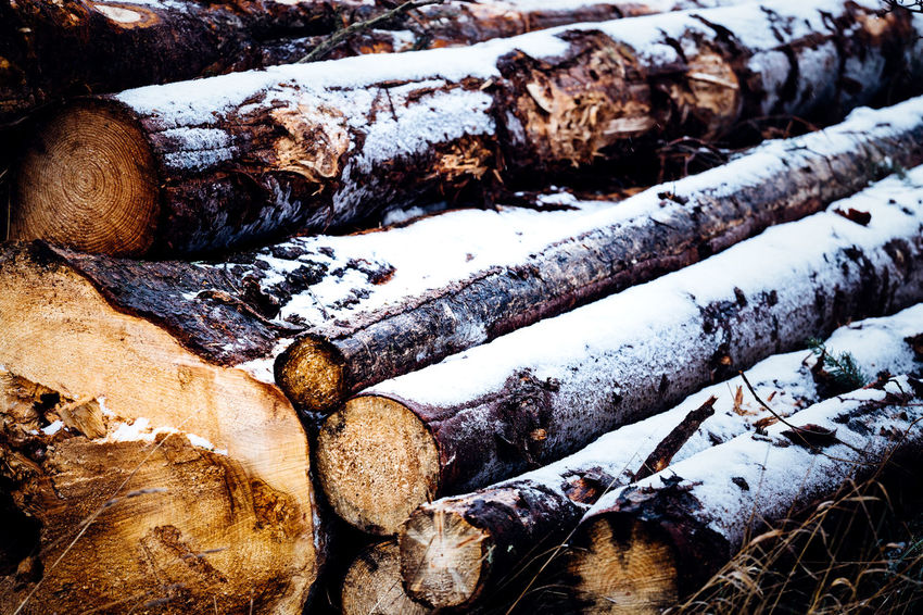 Log Timber Tree Wood Winter Nature Snow Cold Temperature Wood - Material Firewood No People Day Forest Close-up Fossil Fuel Deforestation Lumber Industry Stack Rock Outdoors Flowing Water Tree