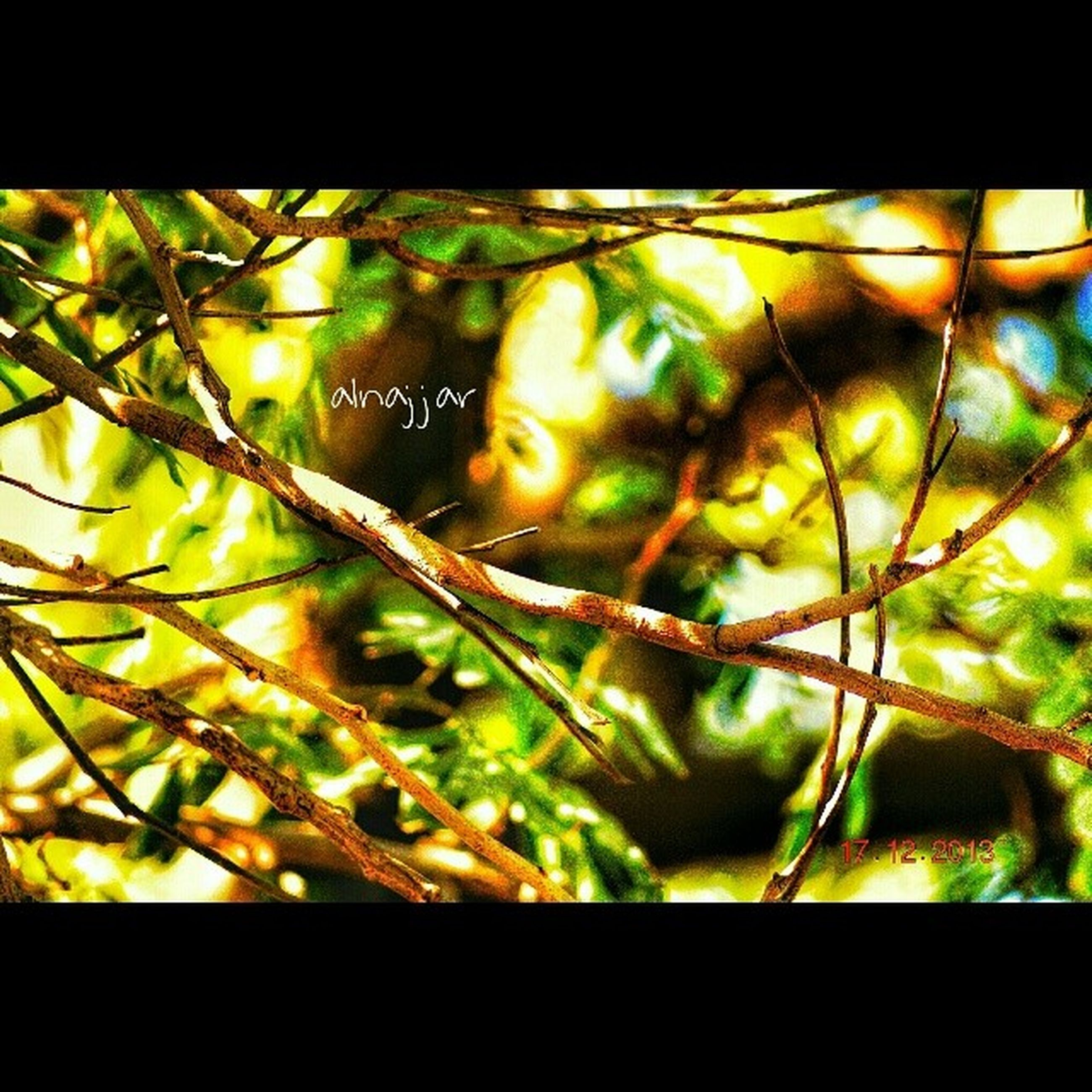 transfer print, close-up, branch, leaf, auto post production filter, growth, indoors, green color, focus on foreground, tree, nature, plant, selective focus, window, no people, day, sunlight, beauty in nature, natural pattern