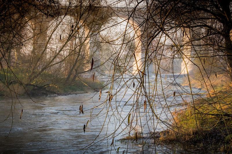 sacer autumn on the river Autumn Leaves River Landscape Landscape #Nature #photography Landscape_photography Moody Nature Photography Nature_collection