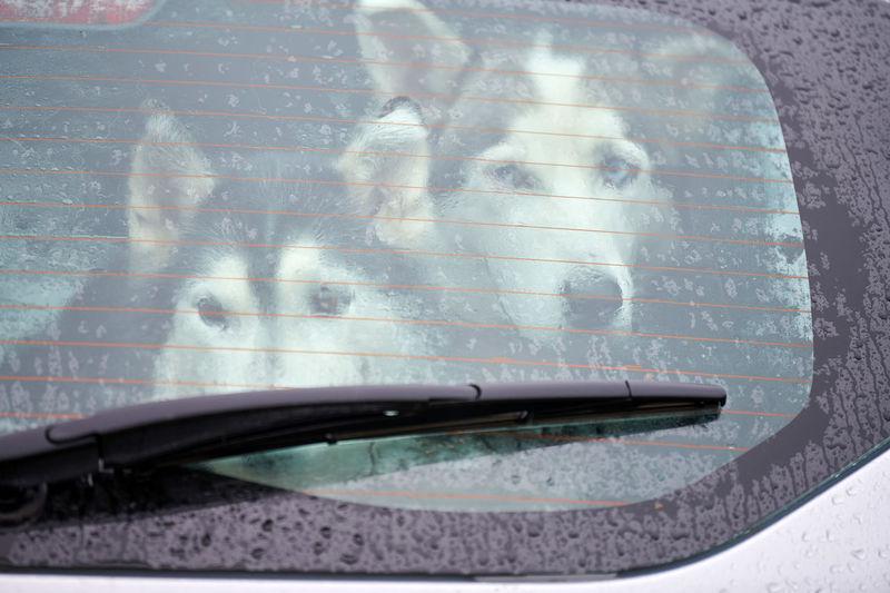 Close-up of wet car window