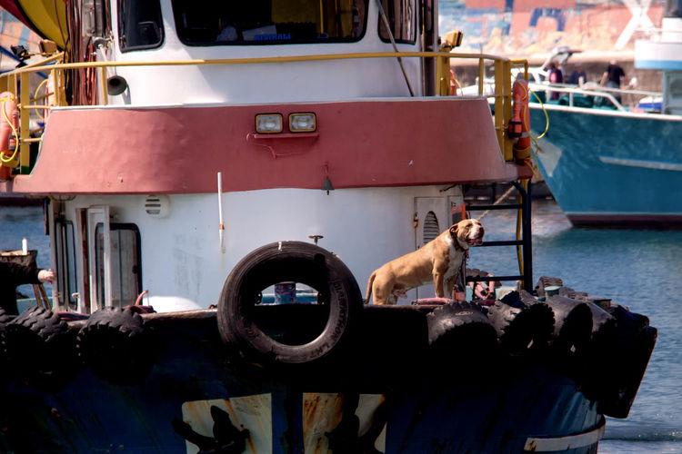 Dog on cropped boats