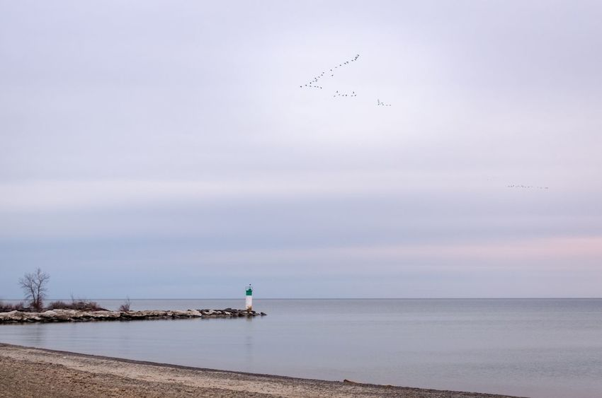 Beach Beauty In Nature Calm Cloud Cloud - Sky Day Geese In Flight Horizon Over Water Idyllic Lake Ontario Lighthouse Nature No People Non-urban Scene Ocean Outdoors Picton  Prince Edward County Scenics Sea Shoreline Sky Tranquil Scene Tranquility Water
