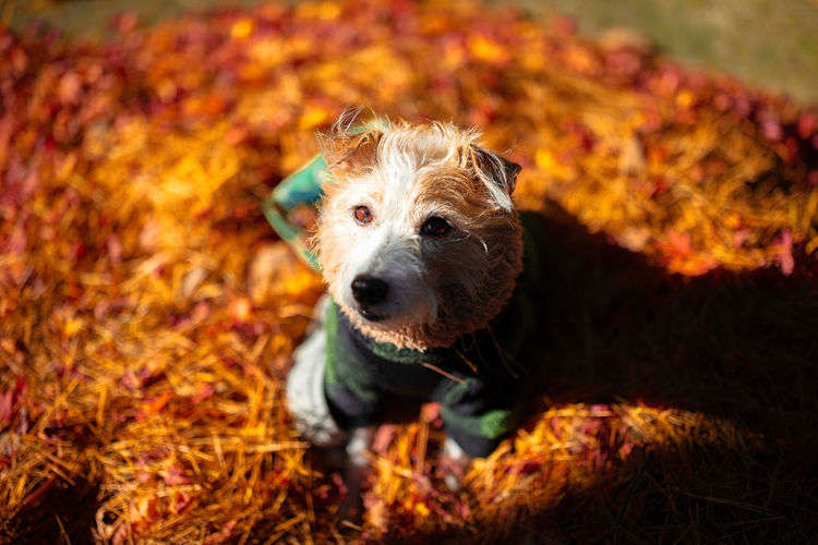 Dog looking away on field during autumn