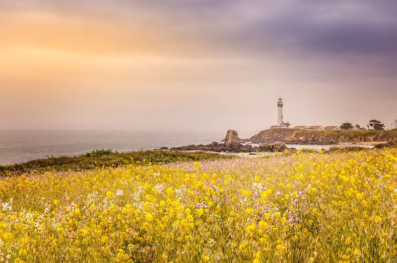 Yellow flowering plants on field by sea against sky