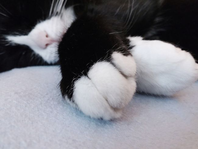 Domestic Cat Pets Domestic Animals One Animal Animal Themes Cat No People Close-up Relaxation Animal Leg Indoors  Day