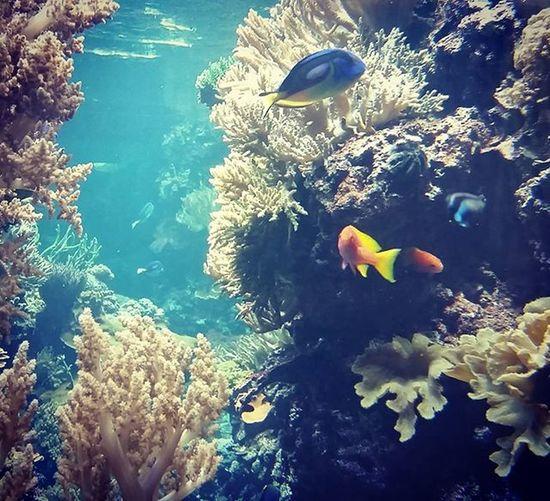 Fish Nurkowanie Awesome Kolorowe Rybki Błękit Woda Aquarium Berlin Germany Zoologischergarten