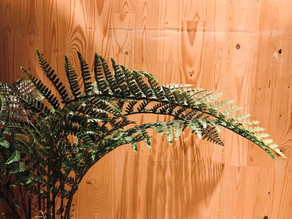 EyeEm Selects Wood - Material Growth Plant Nature Indoors  Wall - Building Feature