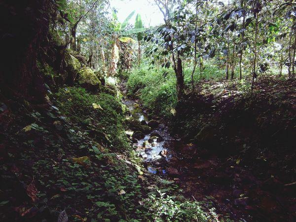 Amazonas Enjoying Life Nature Selva