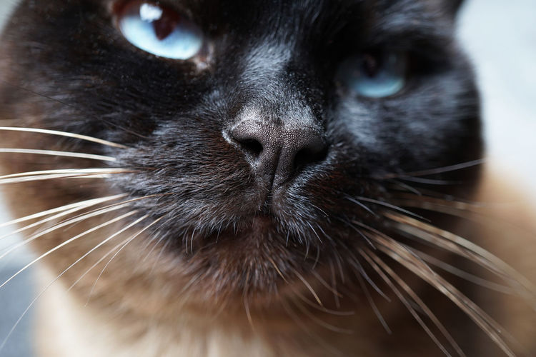 Mammal Domestic Pets Domestic Animals Animal Themes One Animal Animal Cat Domestic Cat Close-up Feline Animal Body Part Whisker No People Animal Head  Animal Nose Snout Cat Nose Macro Nose