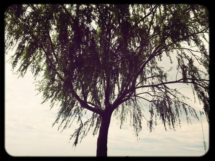Tree árbol