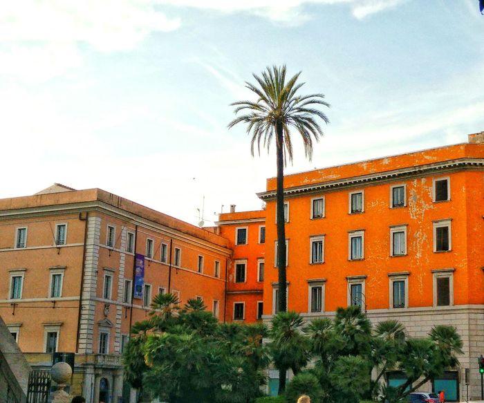 Italy❤️ Italia Travel Summer ☀ Palm Orange Color Blue Sky