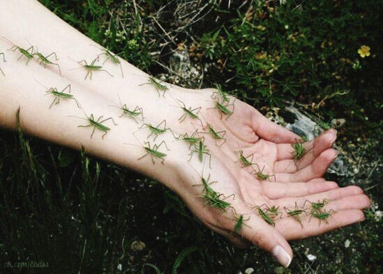 насекомые рука кузнечик