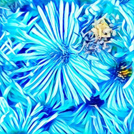 EyeEm Gallery Eyeem Photography Nature-lover Flower Collection