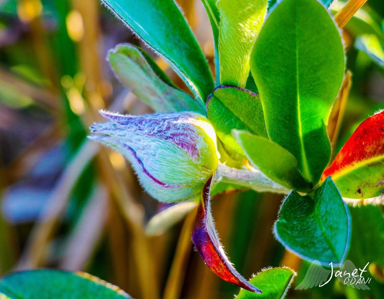 leaf, plant part, growth, plant, close-up, beauty in nature, green color, no people, focus on foreground, nature, freshness, day, flower, flowering plant, selective focus, outdoors, vulnerability, fragility, sunlight, botany, flower head
