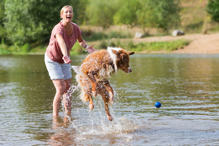 woman plays with her Australian Shepherd dog in a river Action Adult Australian Shepherd  Ball Cheerful Day Dog Domestic Animals Full Length Fun Happiness Jumping Mammal Motion One Person Outdoors Pets Playing Real People River Summer Water Wet Woman Woman And Dog