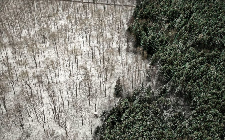 - TIE - DJI X Eyeem Check This Out Forest Photography Dronephotography Drone  Birdseyeview Wintertime Winter Tree Nature Day Growth No People Outdoors Tranquil Scene Tranquility Forest Plant Beauty In Nature Branch Scenics Bare Tree