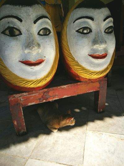 Travel Myanmar HuaweiP9 Cat Finding New Frontiers Adapted To The City