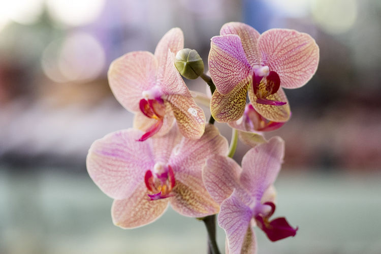 Close-Up Of Pink Orchids Blooming Outdoors