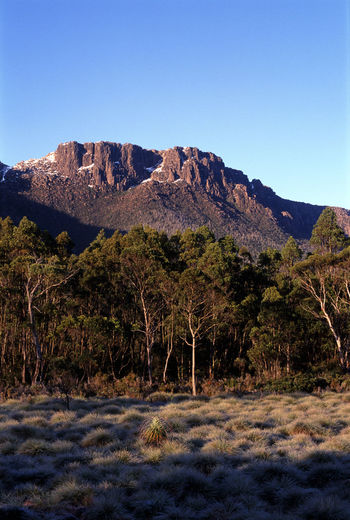 the overland track, classic walking route in tasmania, australia Australia Footpath Frozen Grass Gum Tree Hike Landscape Mountain Mountains Overland Track Tasmania Tassie The Overland Track Walk Walkway