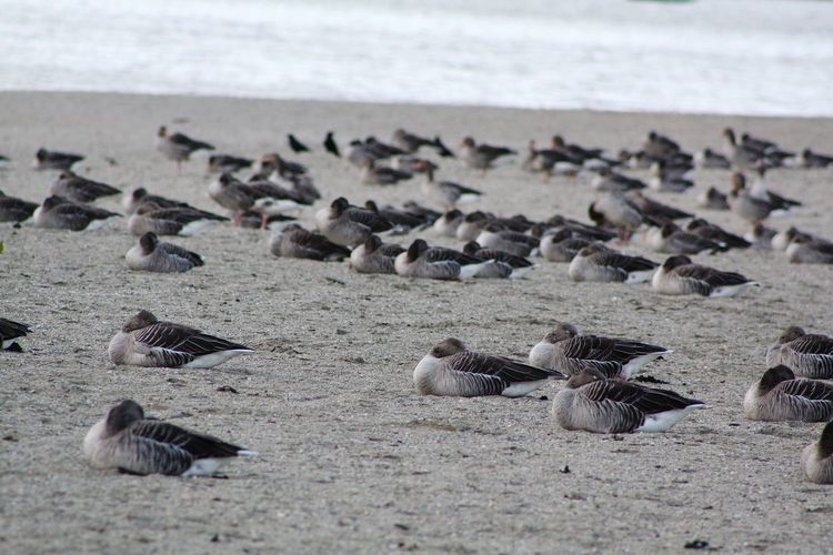 Flock of seagulls on beach