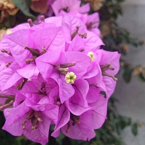Rome Roma Virag Világlegszebbvárosa Lila Nofilter Növény Flower Macro Beauty