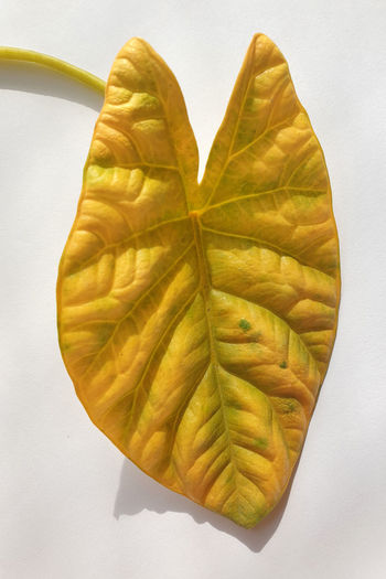 High angle view of leaves against white background