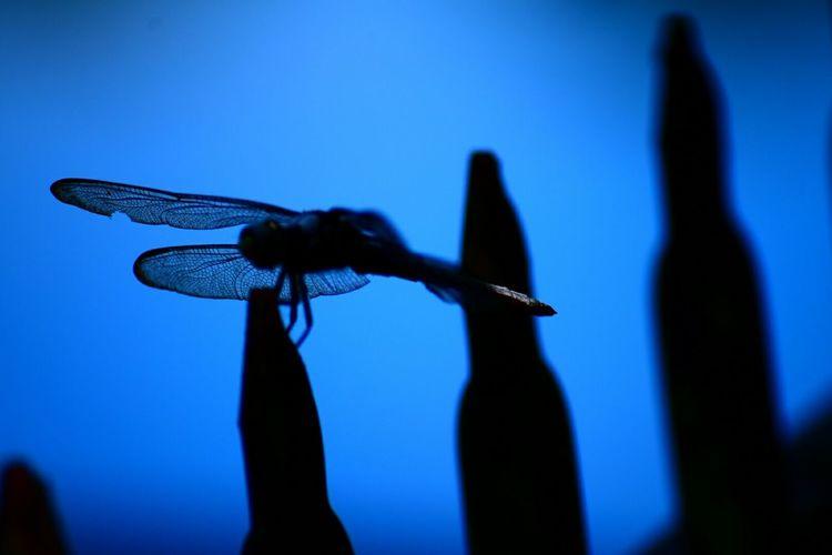 North Carolina Ncnature Nature Dragonfly Blue Lake View OnTheFeNcE