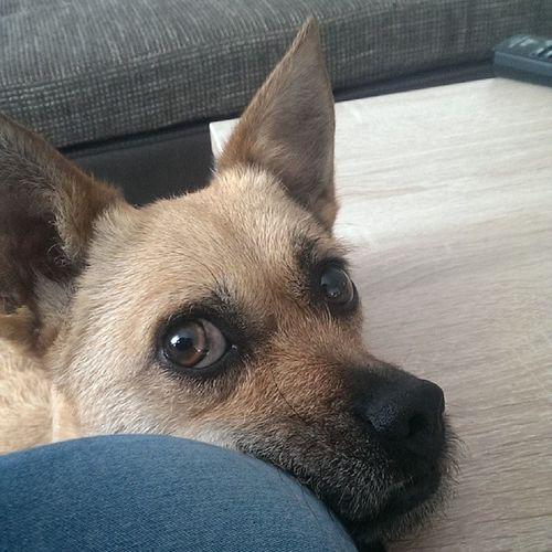 Cutest Dog Hundeblick Keinner kanns besser wilma tierliebe doglove instadog love heart