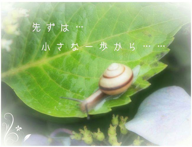 カタツムリ フォトメッセージ Eye Em Nature Lover