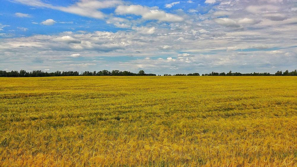 Landscape view near Šiauliai, Lithuania. Travel Travel Destinations Lithuania Lietuva Vacations Trip Lt Rural Agriculture Corn Romantic Sky Agricultural Field Summer July2018 WelcometoLithuania Nature Clouds Sky Landscape Cloud - Sky