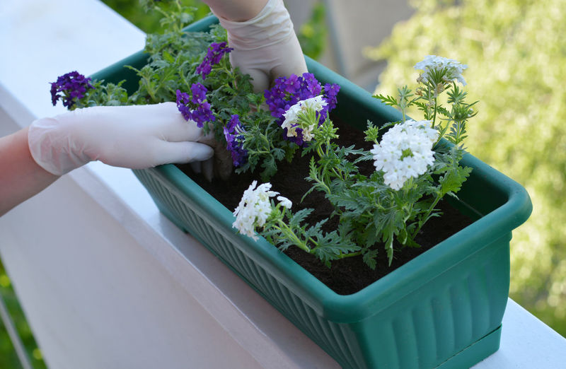 Close-up of florist gardening in container