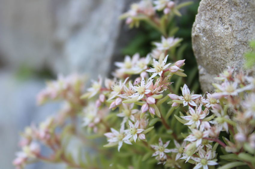 Flower Close-up Plant Flower Head