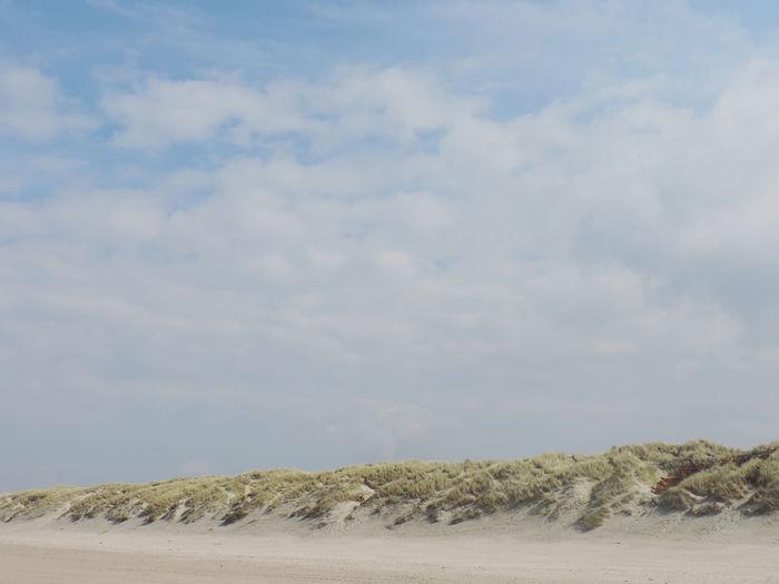Grass on sand at beach against cloudy sky