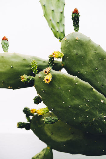 Close-up of cactus growing on tree