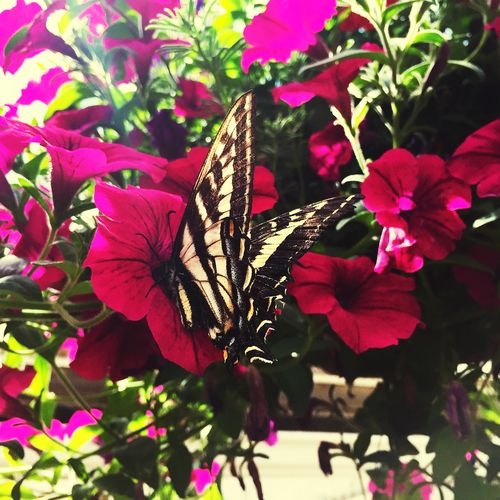 Butterfly Collection Butterfly Plant Beauty In Nature Flower Growth Animal Wing Flowering Plant Freshness Butterfly - Insect Nature Animals In The Wild Flower Head