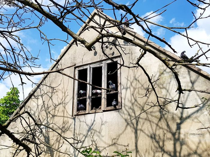 Low angle view of abandoned house against bare tree