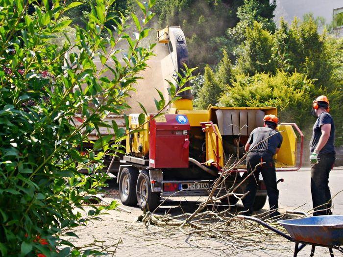 Agriculture Chippers Coworker Day Growth Land Vehicle Lumberjacks Men Mode Of Transportation Nature Occupation Outdoors People Plant Real People Rear View Sawdust Sunlight Transportation Tree Working