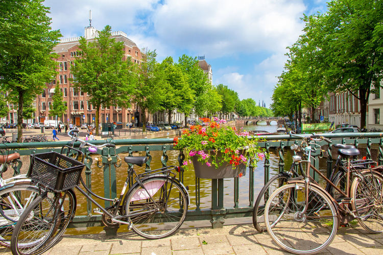Summer in Amsterdam Amsterdam City Green Nature Netherlands Romantic Sightseeing Travel Travelling Tree Bicycle Boat Canal Cheerful Destination Dutch Gracht Grachten Historic Holland Idyllic Ship Summer Tourism Water