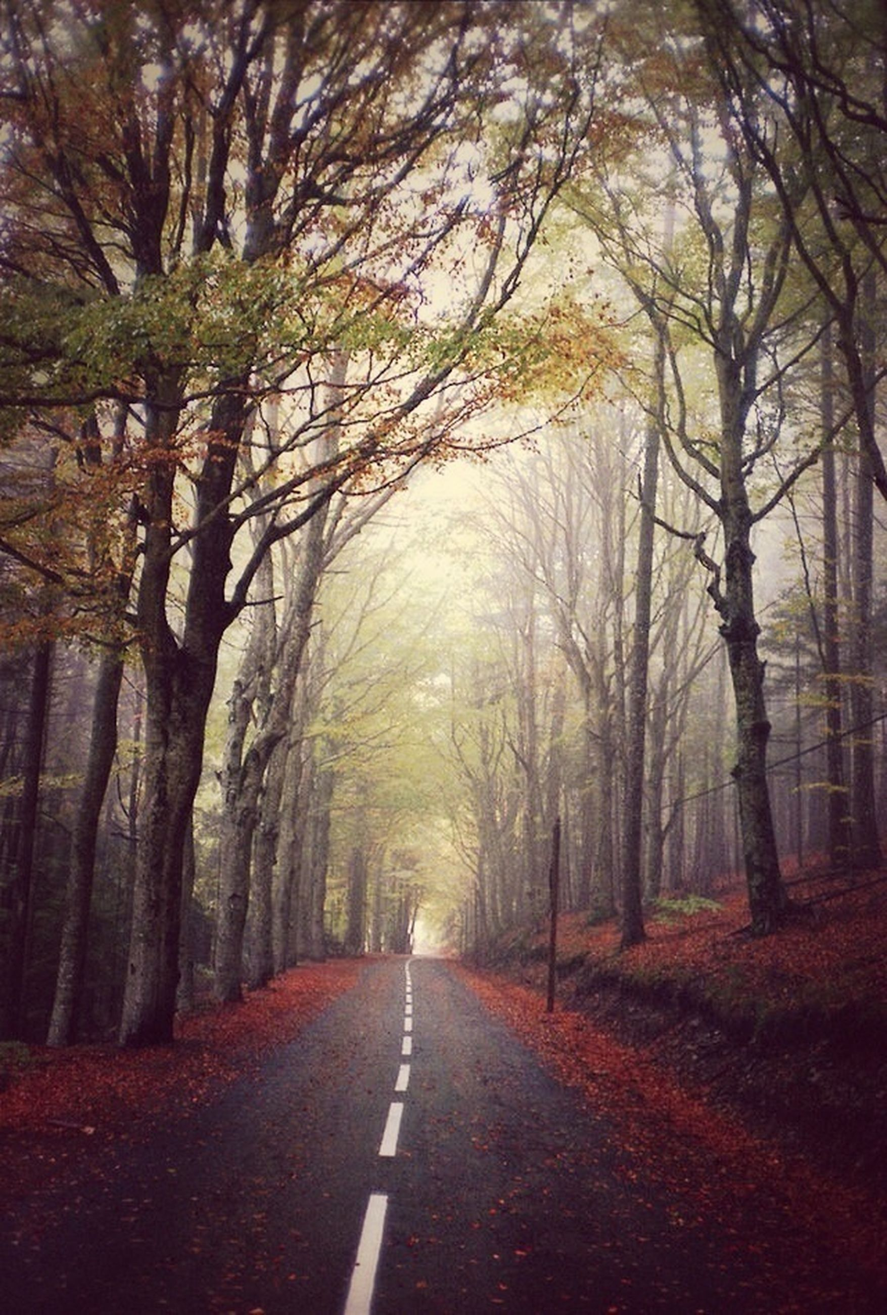 the way forward, tree, road, diminishing perspective, transportation, vanishing point, tranquility, country road, forest, empty road, road marking, tranquil scene, treelined, nature, growth, empty, scenics, beauty in nature, long, street