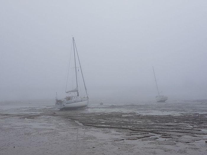 Low Tide Fog