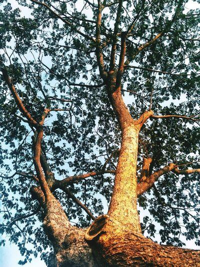 Sorry it took so long Tree Foliage Bark Sunstreak VSCO Cam VSCO